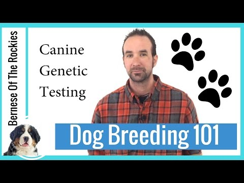 Canine Genetic Testing for Serious Dog Breeders! (Puppy & Dog Owners too!)