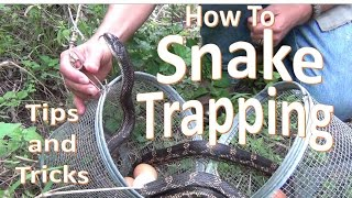 How to Trap Snakes using Minnow Traps (Dos, don