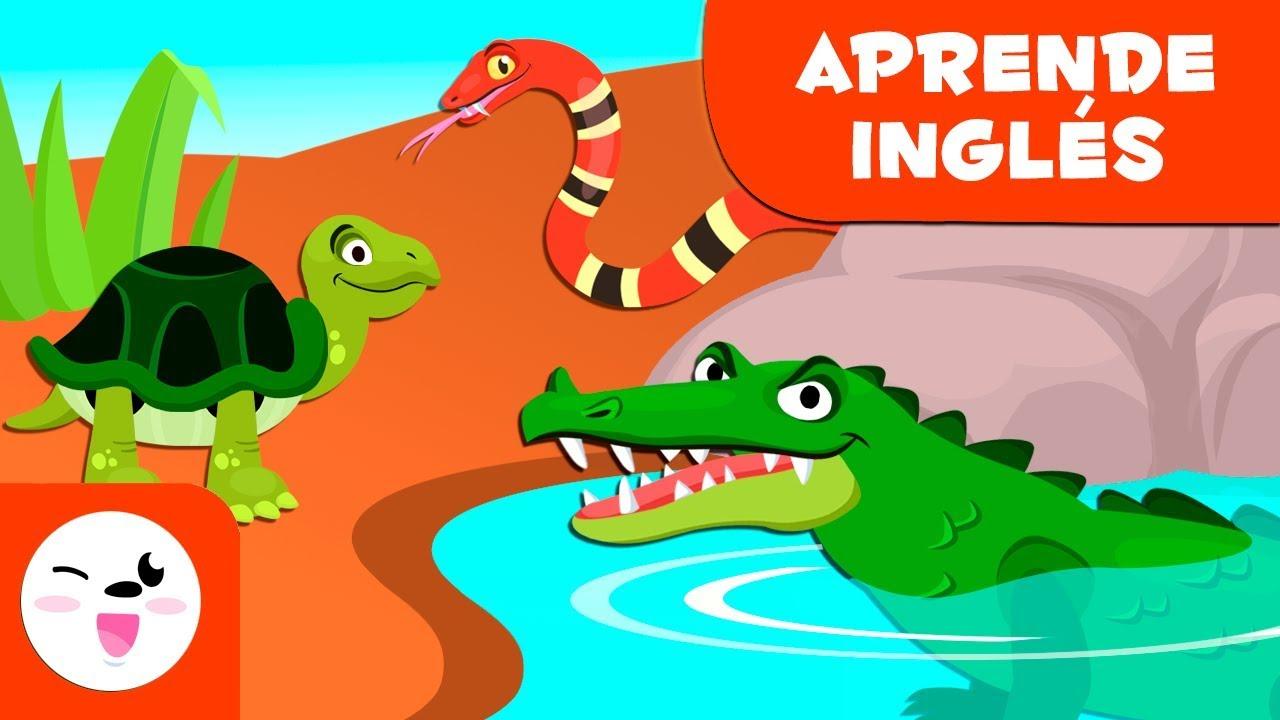 Los reptiles para niños EN INGLÉS Animales vertebrados