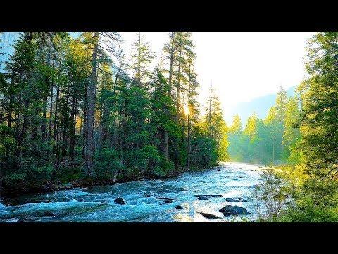 Спокойная музыка и тихая река: красивая фортепьяно, звуки природы, Музыка для сна, для снятия стрес