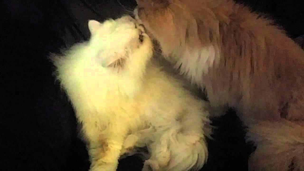 Lesbian cat porn
