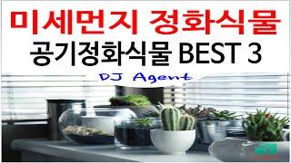 초미세먼지 정화식물(실내 공기정화식물) BEST 3