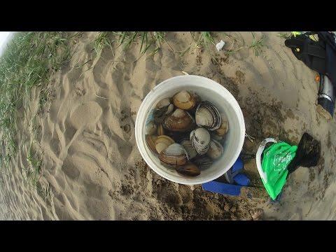 Как приготовить песчанку ракушку
