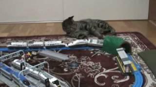 猫ちゃんが新幹線のオモチャで遊んでます。本当は小児用なんですけどね...