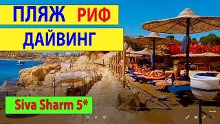 Египет 2021 Пляж Сива Шарм Риф Сива Шарм Дайвинг