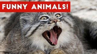 Funny Pet Clips & Moments Caught On Tape December 2016 Weekly Compilation | Funny Pet Videos