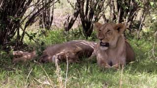 Masai Mara Safari!