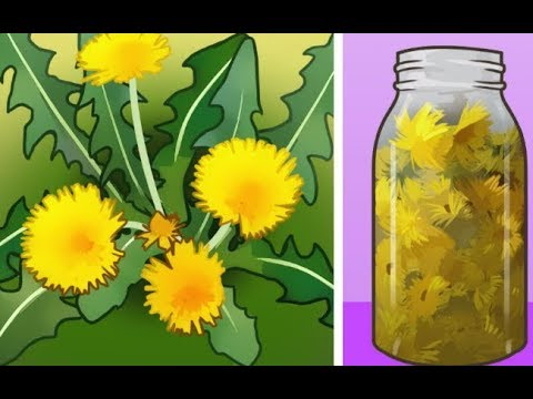 Here are 6 ways you can use Dandelions to help with your health