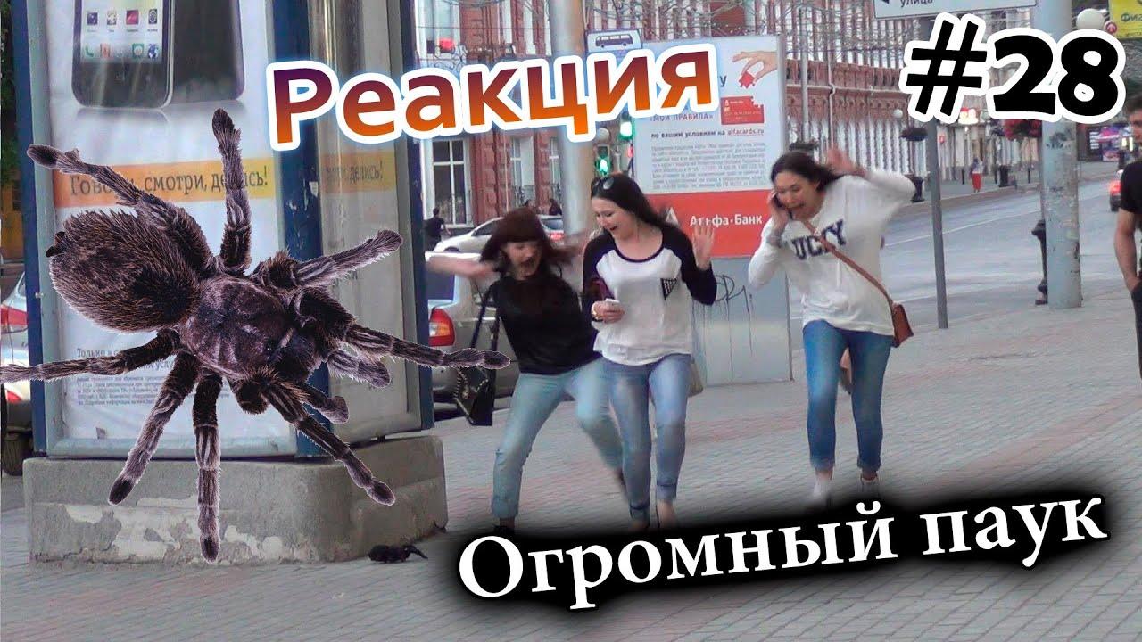 Огромный Паук на Улице Города / Big Scary Spider Prank (Реакция 28)