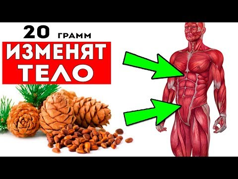 ВОТ КАК КЕДРОВЫЙ ОРЕХ ИЗМЕНИТ ТВОЕ ТЕЛО! Знаете ли вы, сколько можно съедать таких орехов в день?