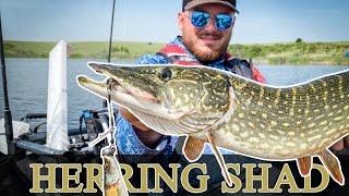 Риболов на щука с големи силикони 4D Herring Shad