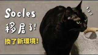 【黃阿瑪的後宮生活】Socles移居了!換了新環境!