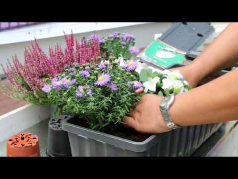 Herbstliches Flair Erhalten Sie Mit Bepflanzten Balkonkästen Ganz Einfach