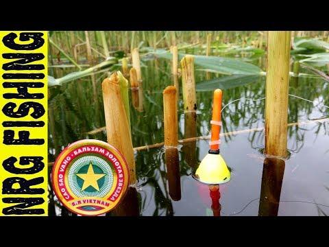 летняя рыбалка на карася - 2017-06-09 07:00:34