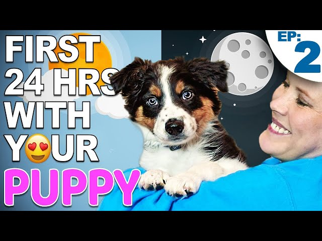 Your First Day And Night With A New Puppy - Training Plan