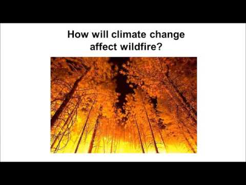 Dave Peterson: Understanding and Managing the Effects of Climate Change on Forests