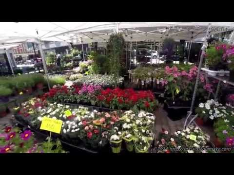 GoPro   Oslo with Tons of Flowers   A Walk Through Oslo's Beautiful Streets and Parks