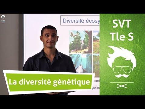 SVT Terminale : la diversité génétique