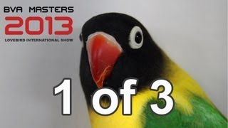 bva masters 2013 part 1 of 3