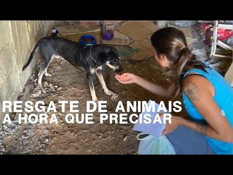 PET HOPE e o Resgate Animal | Um Coração Sincero É...