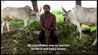 Cotton Farmer Suicide