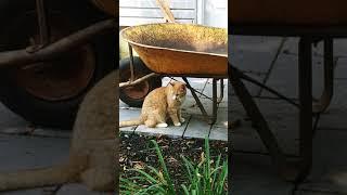 funny cat Vines