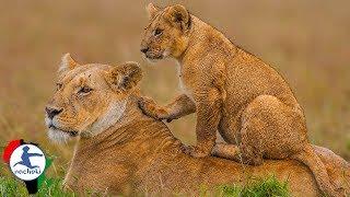 Baixar Top 10 Best Wildlife Parks to Visit in Africa in 2019