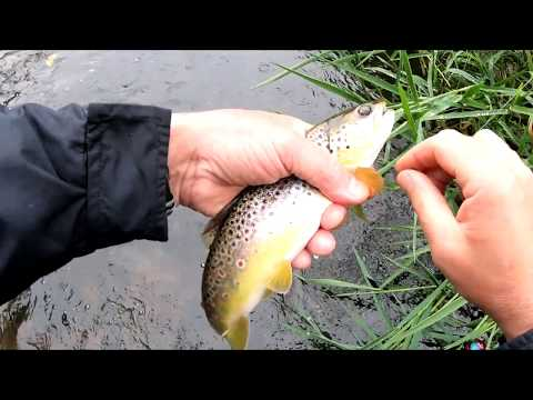 Wow! So Many Fish In This Small Creek! Is Trout Fishing Good In Rain?