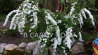 6 самых красивых цветущих декор.кустарников.(2 часть)