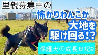 保護犬の成長日記~怖がり克服 シーランの場合②~