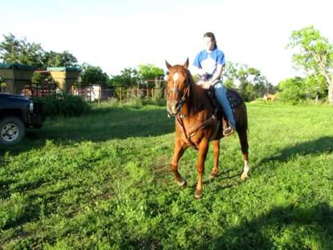 Lucky Sorrel Quarter Horse For Sale