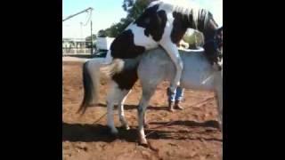 Repeat youtube video J.Cuevas El pinto con la Orejona