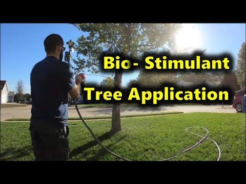 Bio-Stimulant Tree Application   Red Maple Tree Rehab
