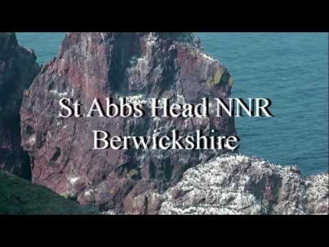 St Abbs Head, Berwickshire mp4