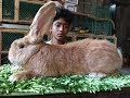 Largest rabbit farm in Bangladesh || Best Rabbit mutation farm|খরগোশ পালন পদ্ধতি