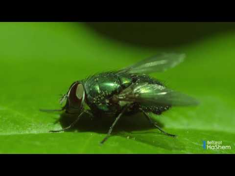 Divine Knowledge In The Torah: Insects & Infectious Diseases (1 minute)
