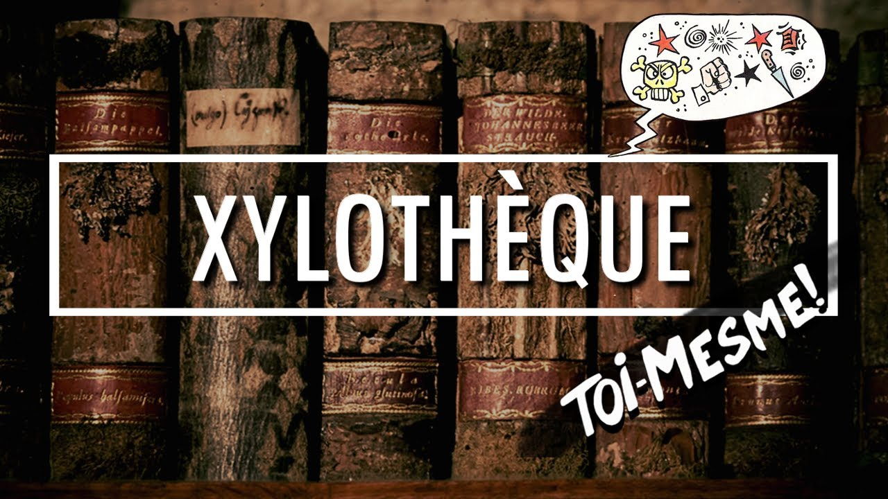 Nouvelle vidéo : Xylothèque (toi-même)