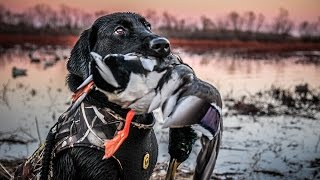 The X: Public Land Duck Hunting In Kansas