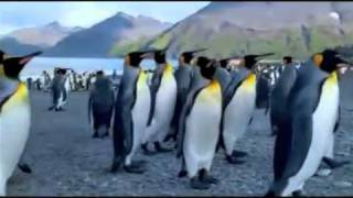 ENDLESS NATURE THEME SONG (Planet Earth animals)