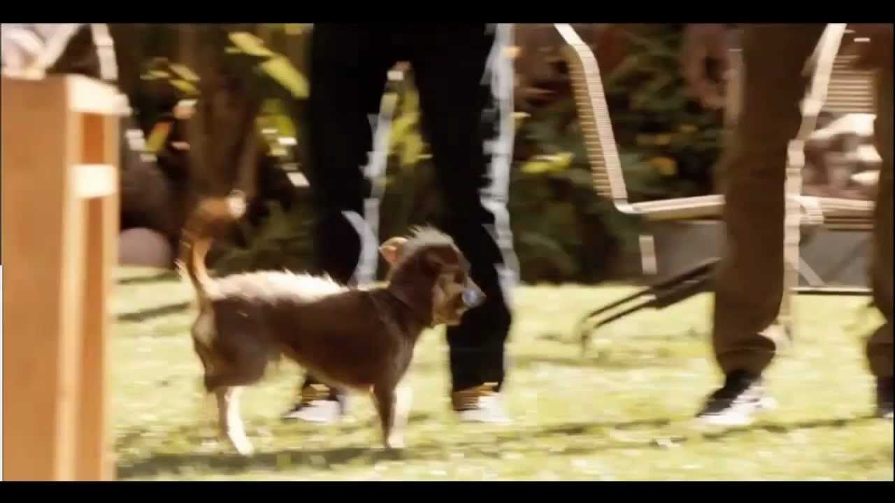 Bud light here we go rescue dog super bowl xlvi commercial bud light here we go rescue dog super bowl xlvi commercial youtube mozeypictures Choice Image