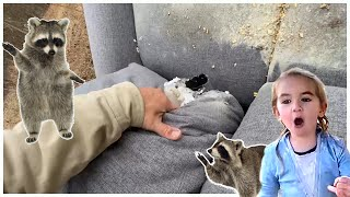 raccoons-living-in-our-couch-should-we-keep-it-not-clickbait