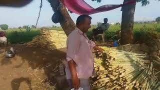 Organic Sugarcane - 17 May 2018 J.P Kotadiya Khambha (Gir)