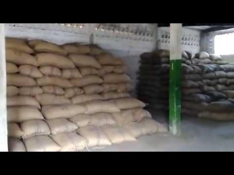 Raw cashew in warehouse