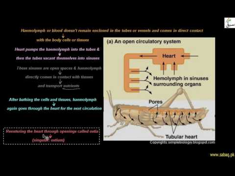 Open Circulatory System, Biology Lecture | Sabaq.pk |
