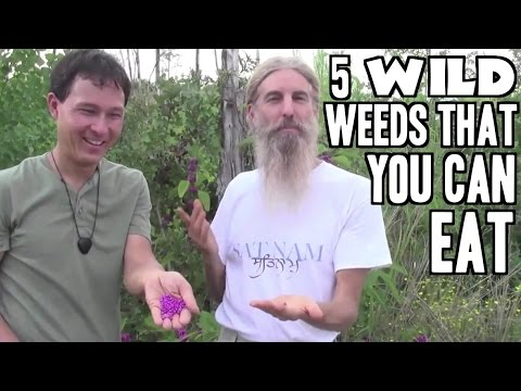 5 Wild Weed Foods that You Can Eat