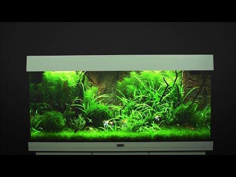 Aquarium einrichten JUWEL Rio 180  / Tutorial