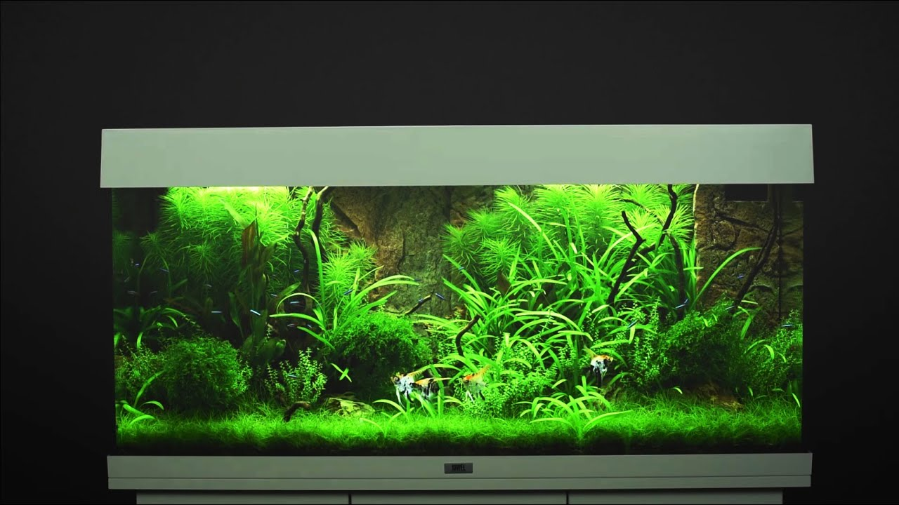 juwel aquarium rio 180 einrichtungsbeispiel tutorial. Black Bedroom Furniture Sets. Home Design Ideas