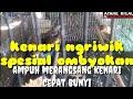 Kenari Ngriwik Spesial Ombyokan  Mp3 - Mp4 Download