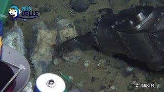有人潜水調査船「しんかい6500」が発見したブラジル沖深海の鯨骨生物群集