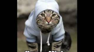 Gangsta Katze